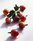 Small red gooseberries