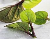 Ceylon spinach (Basella)