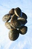 'Amandes de mer' clams