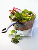Assorted salad leaves (shiso, spinach, chard, chicory)
