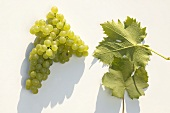 White wine grapes, variety 'Gelber Muskateller'