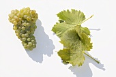 White wine grapes, variety 'Juwel'