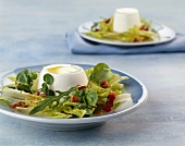 Spring salad with fresh goat's cheese