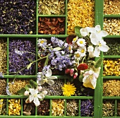 Flowers and flavourings for teas in type case