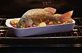 A red snapper in the oven