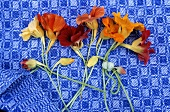 Nasturtium flowers on a kitchen towel