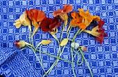 Nasturtium flowers on a kitchen towel