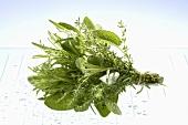 A bunch of fresh herbs