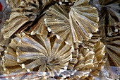 Dried fish (Asia)