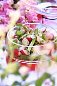 Spring salad with birch leaves and radishes