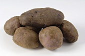Several potatoes, variety 'Edzell Blue'