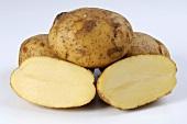 Several potatoes, variety 'Princess' whole and halved