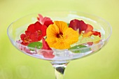 Nasturtium flowers floating in water