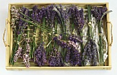 Several bunches of lavender arranged on a tray