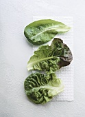 Individual leaves of three different salad crops