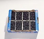 Blackberries in a crate