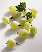 Several gooseberries on light background
