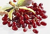 Cornelian cherries, variety 'Hartriegel'