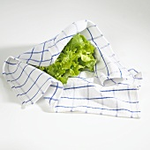 Fresh lettuce in tea towel
