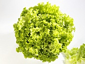 A 'Lollo bianco' lettuce