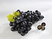 Grapes, varieties 'Piroschka' and 'Nero'