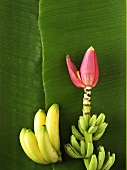 Bananas and bunch of bananas with flower on banana leaf