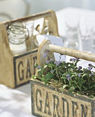 Forget-me-nots in wooden box & box with milk & glasses