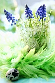 Grape hyacinths and cress in glass