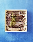 Six squid with sprig of thyme in a bowl