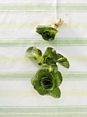 Cicorino verde