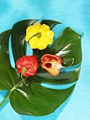 Red and yellow 'Habanero' chillies