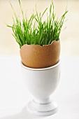 Eierschale mit Gras im Eierbecher
