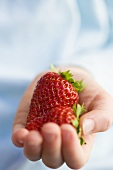 One child's hand holding two fresh strawberries