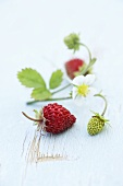 Wild strawberries with flower