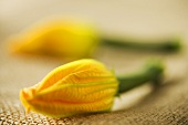 Two courgette flowers on a jute sack