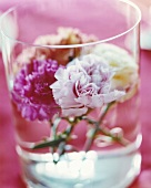 Flowers in a glass of water