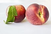 Two peaches with leaf