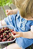 Small girl with a punnet of cherries