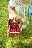 Child holding a basket of fresh raspberries