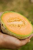 Hand holding half a cantaloupe melon