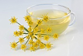 A glass cup of fennel tea with fennel flower