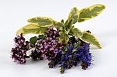 Oregano, lavender and sage