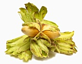 Two unshelled hazelnuts with husks