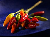 Green, orange and red chillies on stalk