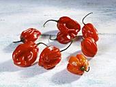 Red Habanero chillies