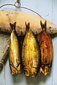 Three kippers (cold-smoked herrings, UK)