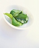 Lemon leaves in a small white dish