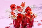 Corn poppies and chervil in red vases