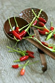 Red chillies with ladle and skimmer