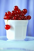 Redcurrants in a small pot